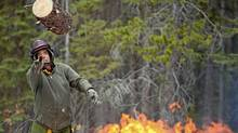 George Bloom tosses a log infested with the mountain pine beetle onto a fire at Kananaskis Provincial Park in Alberta. (Chris Bolin for The Globe and Mail/Chris Bolin for The Globe and Mail)