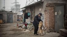 A Chinese man plays with a dog near his home with a coal fired power plant in the background on November 19, 2014 in Beijing, China. (Kevin Frayer/Getty Images)