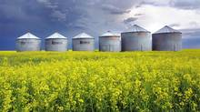 Yellow flowers stand out in a field of canola as dark clouds blot out the sky behind grain silos near Langdon, Alta. (DAVID MOLL/CP)