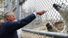 Britain's Prince Charles feeds a polar bear while visiting Assiniboine Park in Winnipeg, Manitoba, May 21, 2014. (MARK BLINCH/THE CANADIAN PRESS)