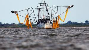 A shrimp boat outfitted with booms to collect oil makes its way to port on May 27 near Grand Isle, Louisiana.