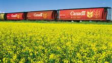 Western Canadian canola plantings look could reach 20 million to 21 million acres this spring, smashing last year's record high of 18.5 million acres.
