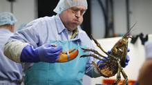 Retail prices for lobsters have remained high into September 2016 with consumers typically paying a few dollars more than the previous year. (Robert F. Bukaty/AP)