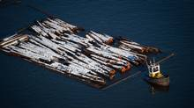 A tugboat pulls logs on the Fraser River between New Westminster and Delta, B.C. (DARRYL DYCK/The Globe and Mail)