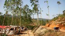 A Sino-Forest operation in China.
