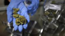 Lab results show that 13 of 22 samples tested from about a dozen Vancouver dispensaries contained high levels of banned chemicals. (Fred Lum/The Globe and Mail)