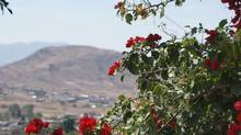 The occasional bloom stands out defiantly in Mexico's arid landscape. (Susan Smith/The Globe and Mail)