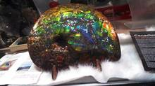 A piece of ammolite 28 centimetres long was stolen from Rocks and Gems Canada in Vancouver's Gastown district. (CP)