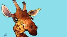 Giraffe (Anthony Jenkins/The Globe and Mail)