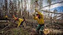 A group of 300 South African firefighters work to uproot a tree as they remove hot spots outside of Fort McMurray, Alberta. (Topher Seguin/Reuters)