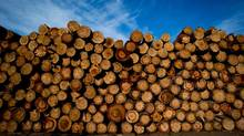 Exports of forestry products are expected to increase by 11 per cent in 2014, according to Export Development Canada. (DARRYL DYCK For The Globe and Mail)