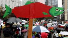 A cutout of a sockeye salmon is raised above the crowd during a demonstration to coincide with the start of the Cohen Commission inquiry into the 2009 decline of sockeye salmon in the Fraser River, in Vancouver, B.C., on Oct. 25, 2010. (DARRYL DYCK/THE CANADIAN PRESS)