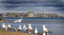 Seagulls sun on the beach where the Rouge River meets Lake Ontario. In the distance is the Pickering nuclear power plant. (Peter Power/The Globe and Mail)