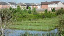 In a pond in Brampton, Ont., are half a dozen oblong islands that weren't there last summer. (Credit Valley Conservation/Credit Valley Conservation)