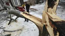 Mike Nunnaro cuts up a tree brought down by the weight of ice, in downtown Brampton, December 22, 2013. (J.P. MOCZULSKI FOR THE GLOBE AND MAIL)