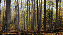 Happy Valley Forest in King Township, Ont. (Nature Conservatory Canada)