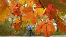 A cyclist rides through Gatineau Park as leaves change colour near Chelsea, Que.. (Adrian Wyld/THE CANADIAN PRESS)