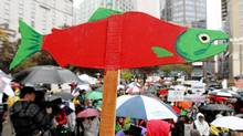 A cutout of a sockeye salmon is raised above the crowd during a demonstration to coincide with the start of the Cohen Commission Inquiry into the 2009 decline of sockeye salmon in the Fraser River, in Vancouver, B.C., on Monday, Oct. 25, 2010. (Darryl Dyck/ The Canadian Press/Darryl Dyck/ The Canadian Press)