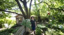 """Hilary Scharper is seen next to a tree that caused a dispute between her and her neighbours in Toronto, Ont. Friday, """"This could impact 60 per cent of Toronto's trees,"""" Ms. Scharper said. June 14, 2013. (Kevin Van Paassen/The Globe and Mail)"""
