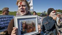 Animal-rights protestors demonstrate against the slaughtering of horses in front of a processing plant Monday, October 4, 2010 in Massueville, Que. (Paul Chiasson/Paul Chiasson/The Canadian Press)