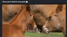 Video on horse giving birth to twin fillies. (Reuters)