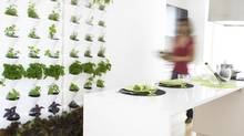 Minigardens are modular garden systems that range from small tabletop models to room dividers.