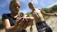 Colm Beattie, 12, right, and his younger sister Avery Beattie, 10, spend some time swimming in the pond and looking for frogs in the creek at the back of their family's 13 acre property in Collingwood. (Peter Power/The Globe and Mail)