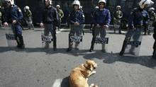 A dog sits in front of riot policemen during a rally against an agreement between Greece's Piraeus Port (OLP) and Chinese Cosco group in Athens March 4, 2009. (John Kolesidis/Reuters)