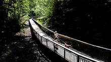 The Glen Stewart Ravine in The Beaches which supports a rare and sensitive red oak forest, officially opens May 26, 2012. Shown is a newly constructed boardwalk section. (Moe Doiron/The Globe and Mail/Moe Doiron/The Globe and Mail)