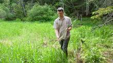 On Prince Edward Island, forager Sylvain Cormier picks and supplies cattails for local chefs. (Light & Vision Photography/Louise Vessey)