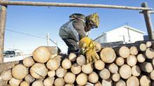 An Attawapiskat resident stacks firewood he sells on the troubled Northern Ontario reserve on Nov. 29, 2011. (Adrian Wyld/THE CANADIAN PRESS)