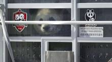 One of two Panda bears peers out of a container as its unloaded from a FedEx transport jet March 25, 2013 in Toronto. (Moe Doiron/The Globe and Mail)