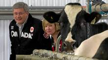 Prime Minister Stephen Harper and his wife Laureen visit a dairy farm while camapigning in Acton Vale, Que., Sunday April 10, 2011. (Sean Kilpatrick/Sean Kilpatrick/THE CANADIAN PRESS)