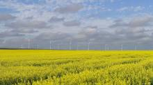 Canada produced 18 million tonnes of canola in 2013, and there are now 43,000 farmers in the country growing the crop. (TODD KOROL/REUTERS)